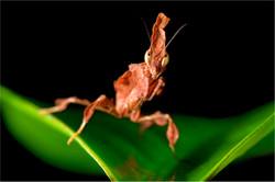 Tiersitting Insekten