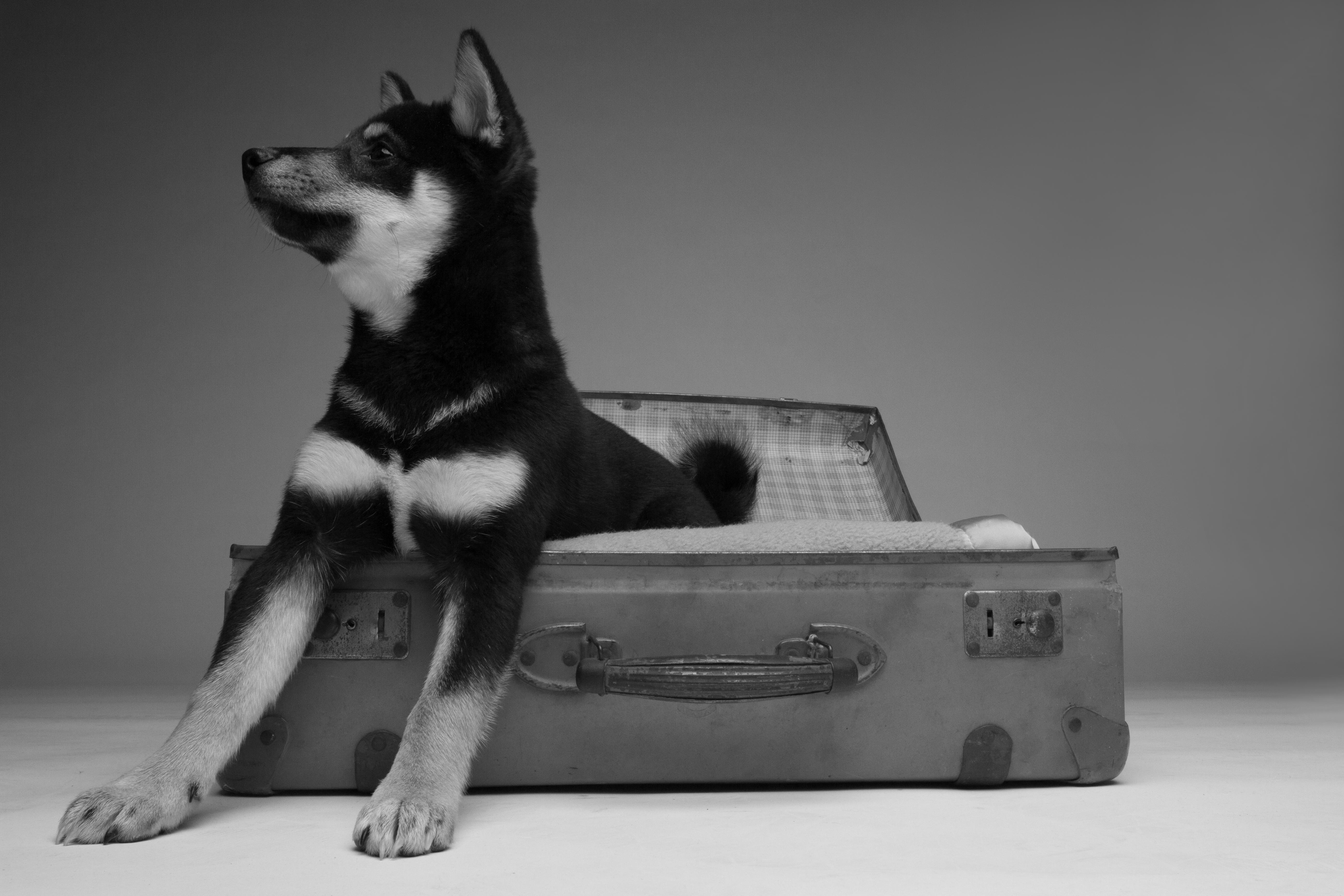 Tierbetreuung für Hunde