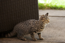 Tiersitting Katze, Katzen, Hund, Hunde