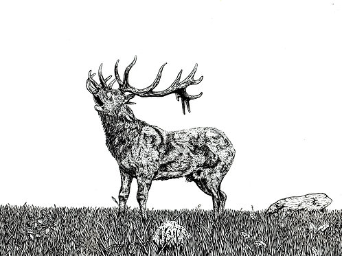 Red Stag in the Highlands