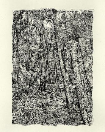 Darrick Wood