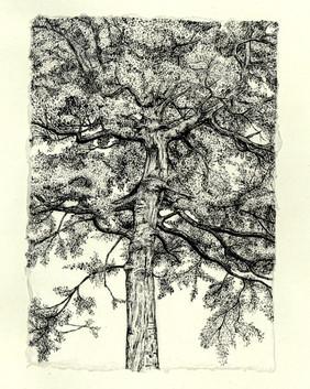 Hockenden Wood