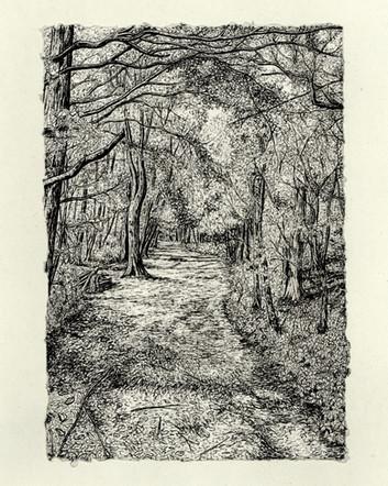 Norheads Lane Woodland