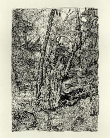 Pimlico Wood