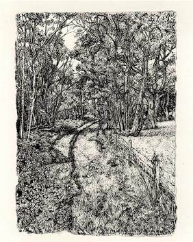 Lower Broom Wood