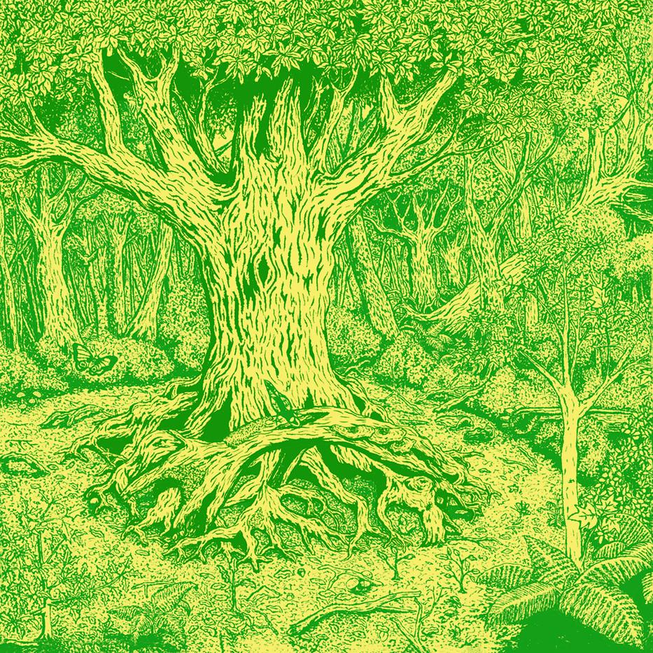 Woodland - Extinction Rebellion