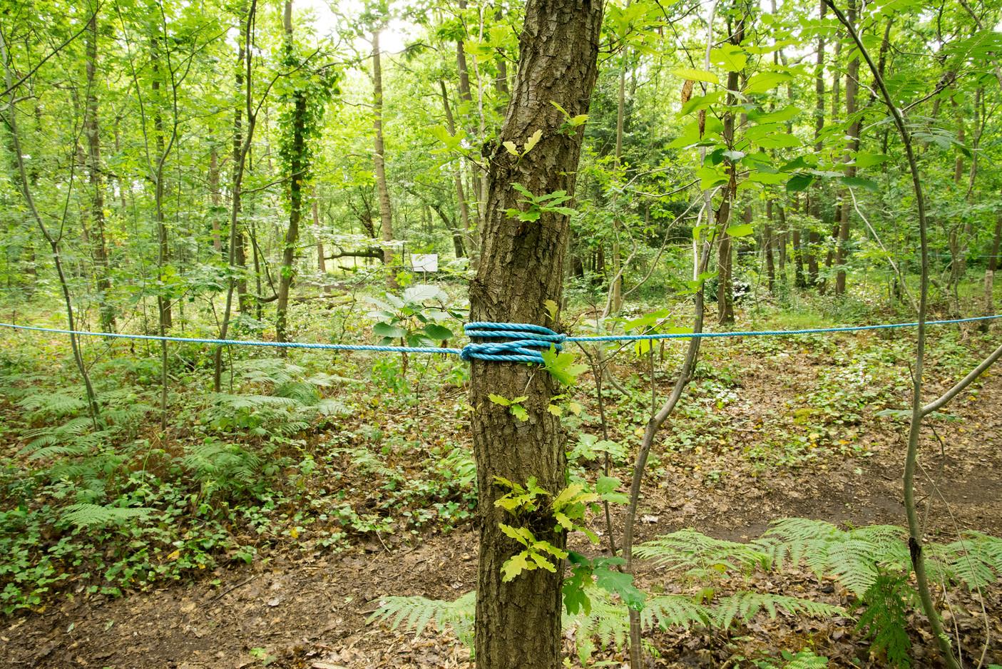 Rope on Tree