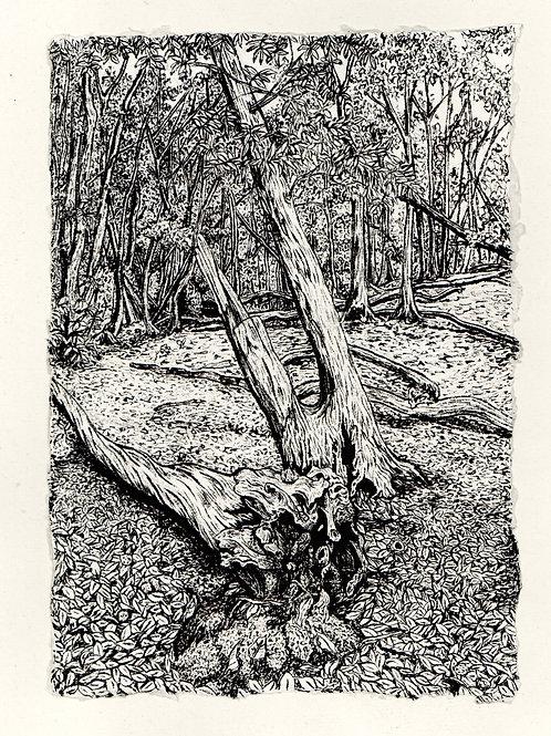 Kynaston Wood