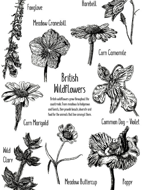 British Wildflowers