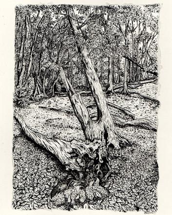 Kynaston Woods