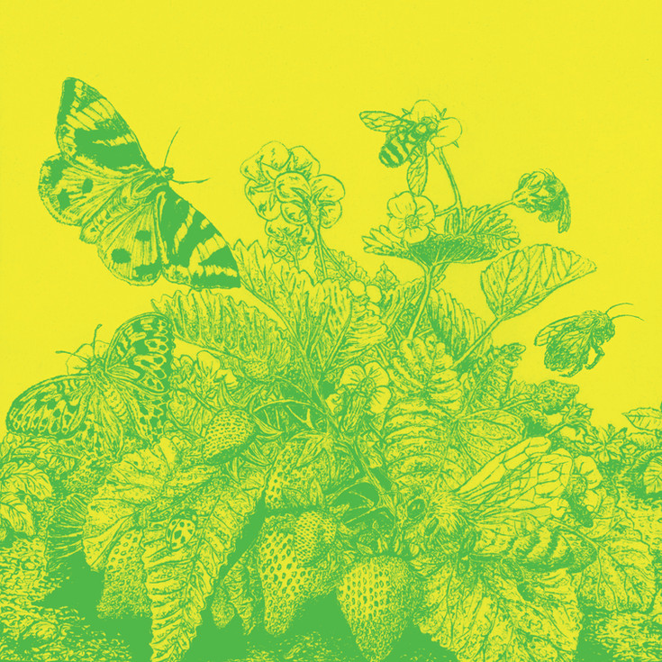 Insects - Extinction Rebellion