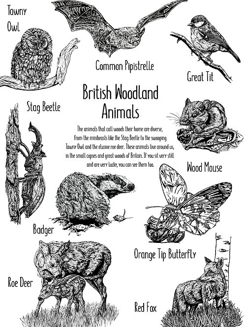 British Woodland Animals