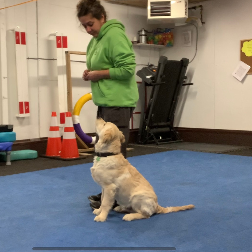 Small Breeds Only - Puppy Kindergarten for dogs aged 16 to 22 weeks (at start of course)