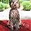 Thumbnail: Dirty Dog Mat