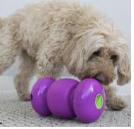 Kong Dog Toy