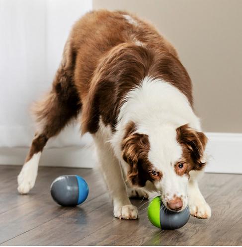 Pet-safe Ricochet Electronic Dog Toy