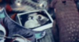 ultrasound photo surrounded by string li