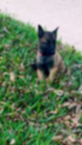 Kahlua-Flash bebito1.jpg