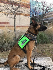 clara therapy dog.jpg
