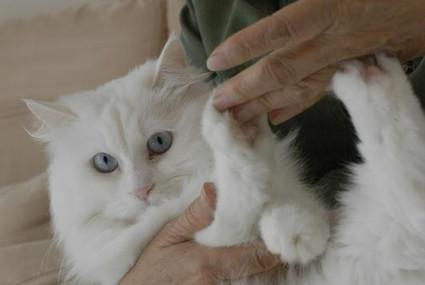 她一來到我家就細蝦大我隻Barney大貓!