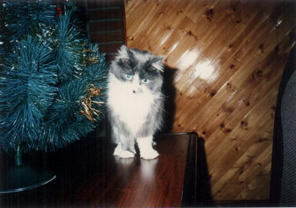 My 2nd cat : Chanky 棖雞的意思