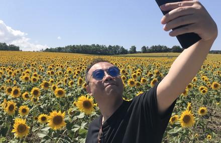 Sunflower fields in Sapporo, Japan August 2018