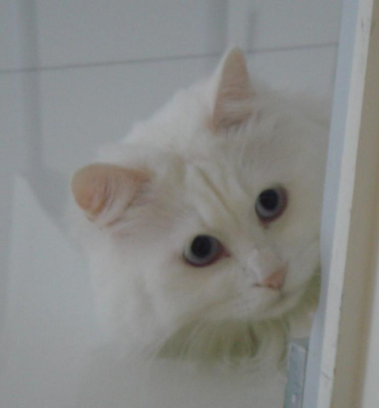My lovely cat daughter Pinky