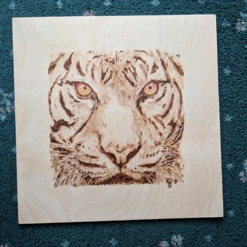 Tiger Eyes!