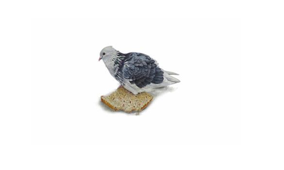 A City Pigeon