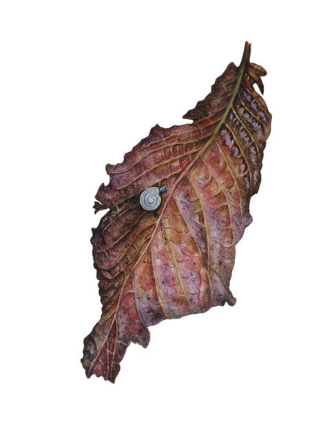 Dry leaf and a snail