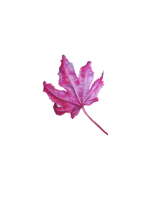 Pink autumn leaf