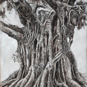 Print of Fig Tree Darwing 1 - Bardon