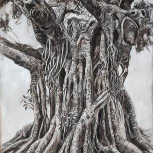 Fig Tree Drawing 1 - Bardon