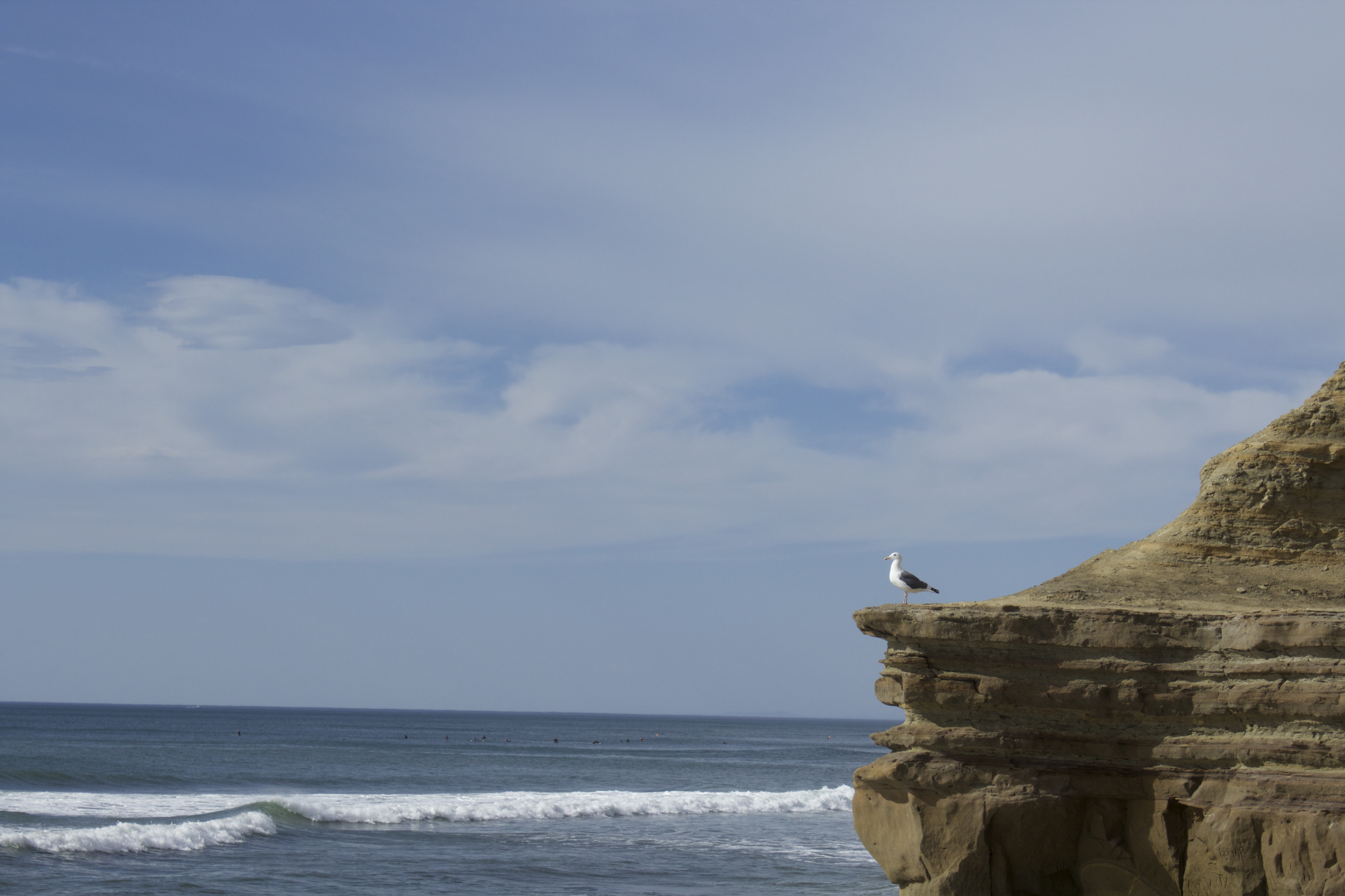 Seagull at Surf