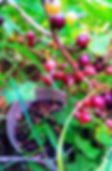 berries2_edited.jpg