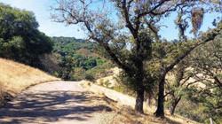 the way with oak.jpg