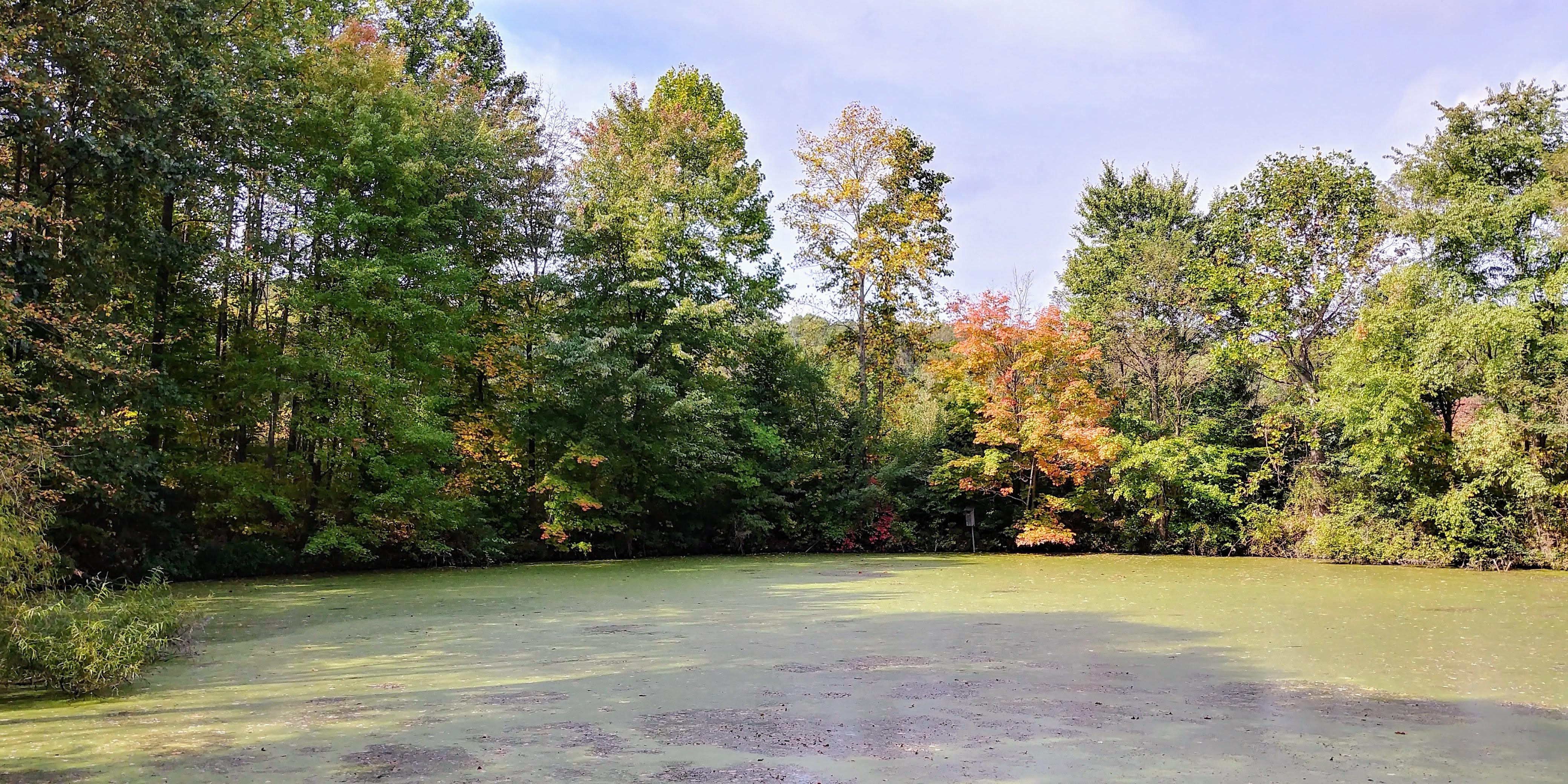 murky pond.jpg