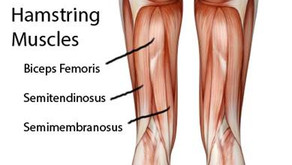 Hamstrings Strung Out?
