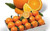 fruitsale.jpg