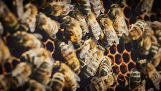 DOCUMENTAIRE // APICULTURE