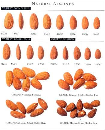Types-Of-Almonds-In-India.jpg
