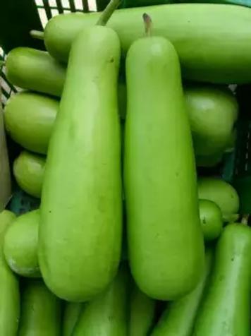 दुधीभोपळा / Bottle Gourd 250 gm