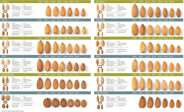 almond-types.jpg