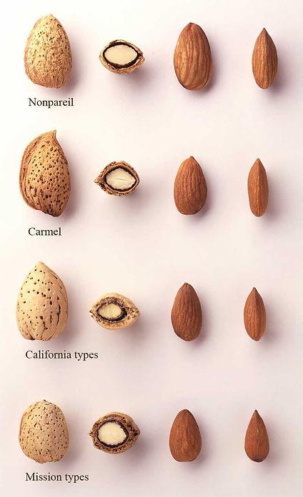 types-of-almonds.jpg