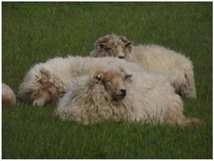wool page 2.jpg