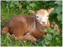 Why Choose Portland Sheep | portland sheep home