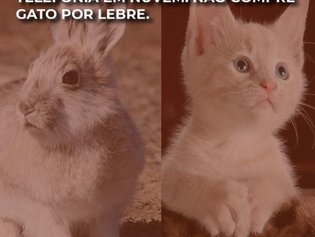 Telefonia em nuvem: não compre gato por lebre