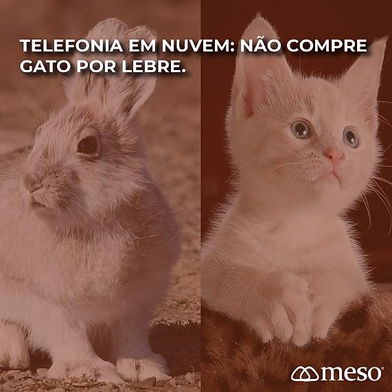 Gato_Lebre_Pabx_Virtual_Meso.png