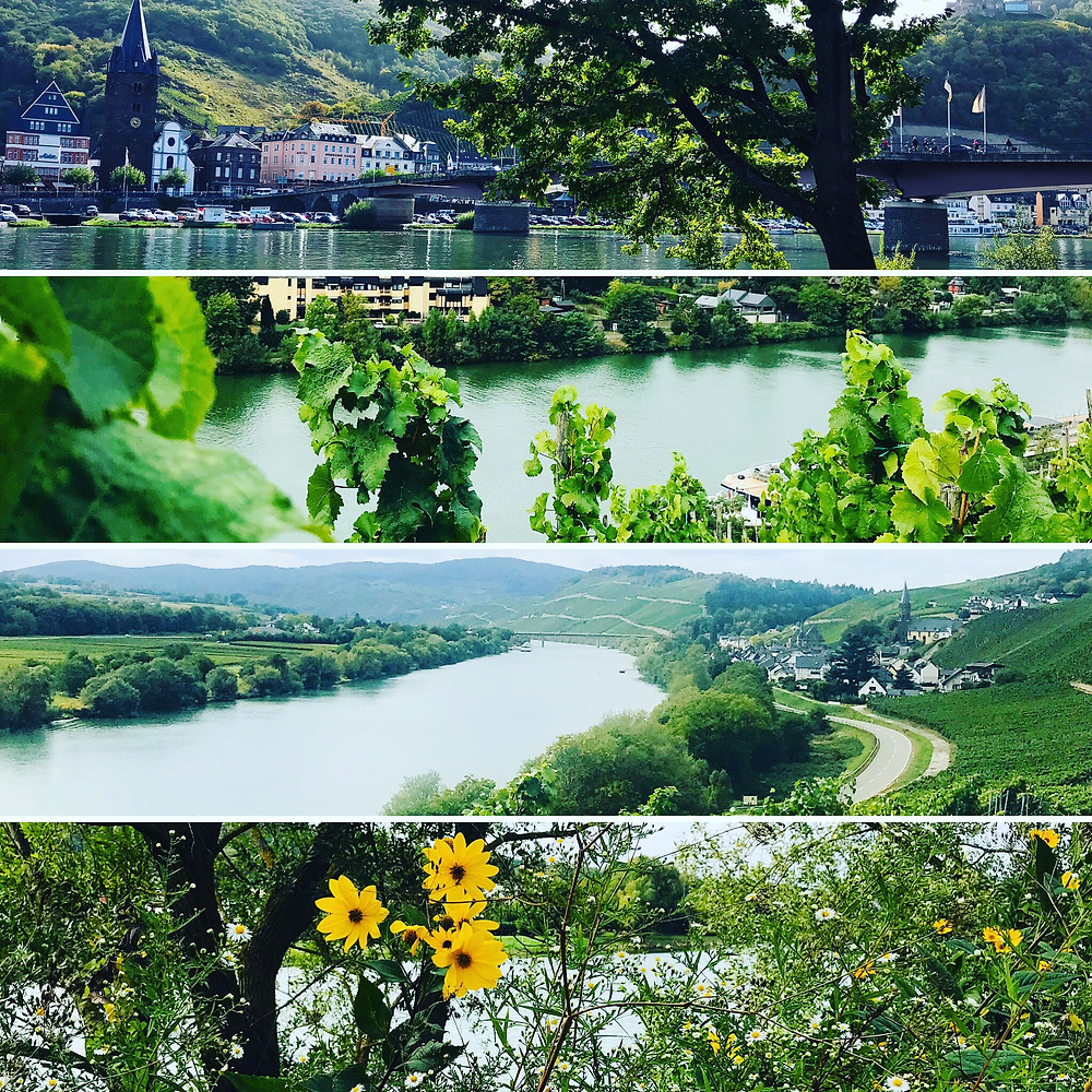 the ripe vineyards of bernkastel-kues on a beautiful blue skied autumns day