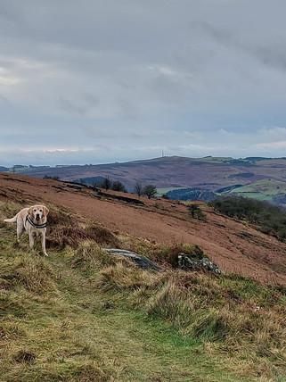 Sheffield dog walker